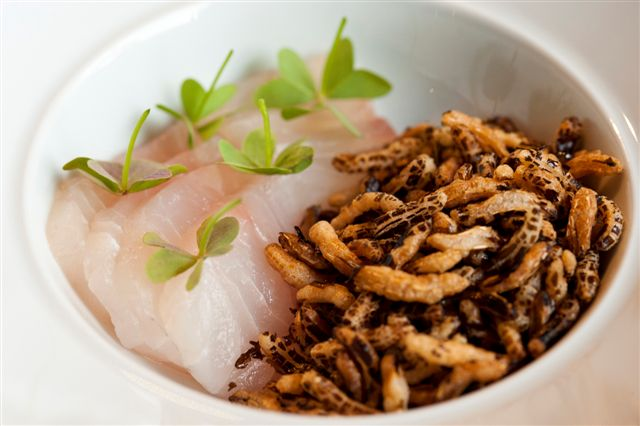 Pink snapper served with sausage tartare, wild rice and wood sorrel - Hentley Farm