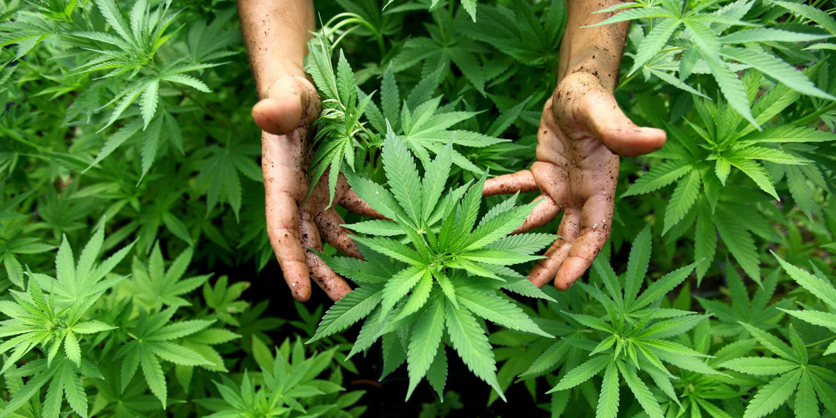 the persistent spread of marijuana in rhode island On august 24, 2009, rhode island's providence journal reported that the state is moving forward with plans to create [its] first medical marijuana clinic where.