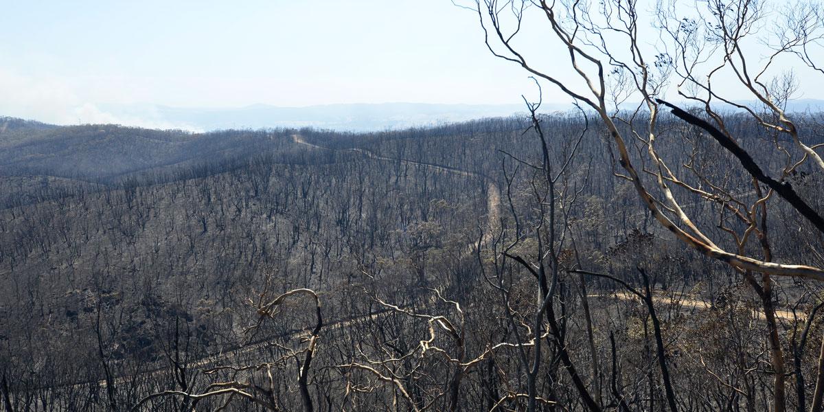 Burnt out land near Kersbrook.