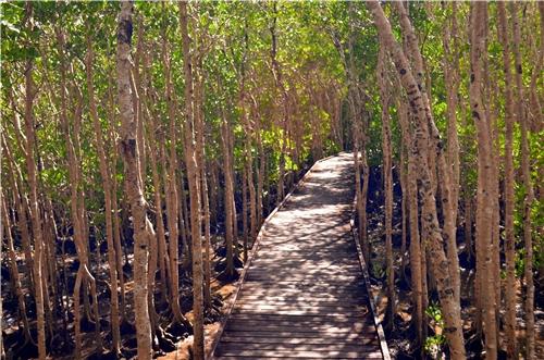 Mangrove board