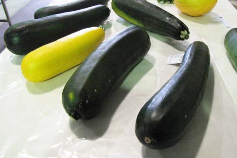 Uraidla-Show-zucchinis-small-resized