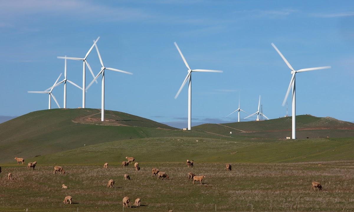The Hallett windfarm in South Australia's mid north. Photo: Tony Lewis