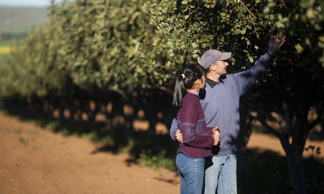 Michael and Jam Jolley at their carob orchard.