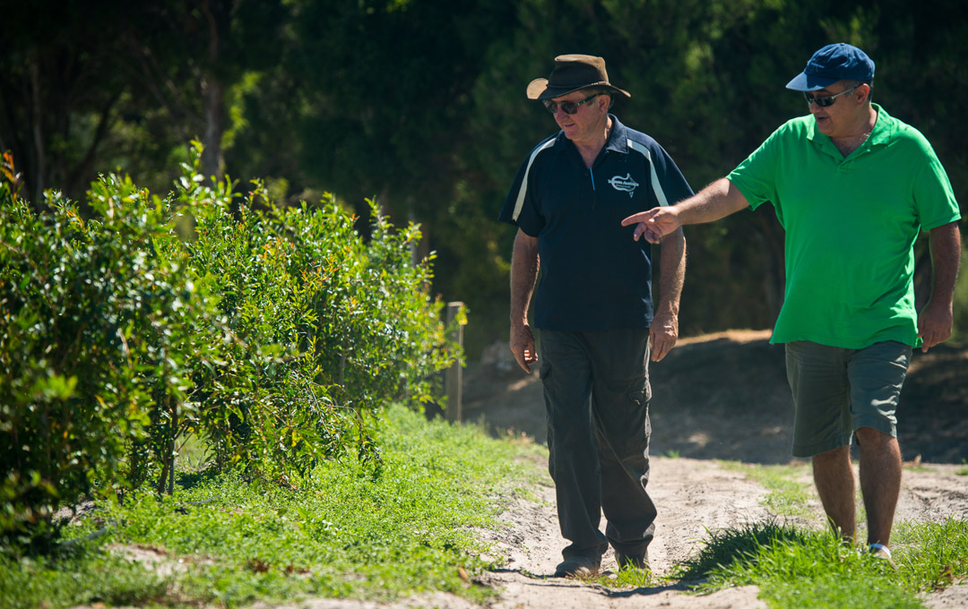 PomPersia founder Omid Rad (right) inspects young pomegranate trees with Adelaide Hills farmer Patrick Ryan.