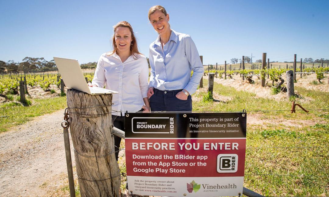 project-boundary-rider-sa-vineyards