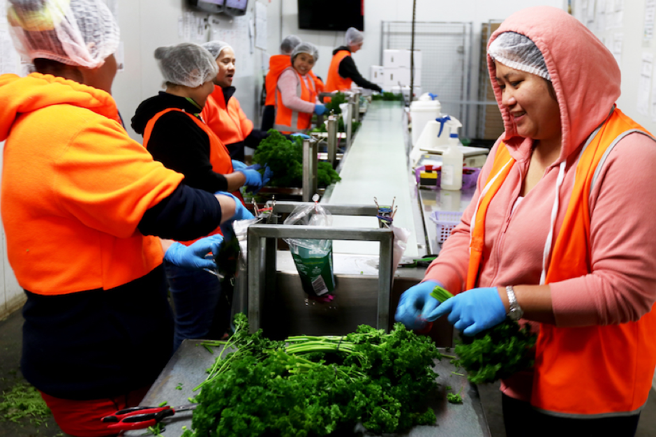 About a third of workers at Holla-Fresh are migrants or refugees. Photo by Kate Hill.