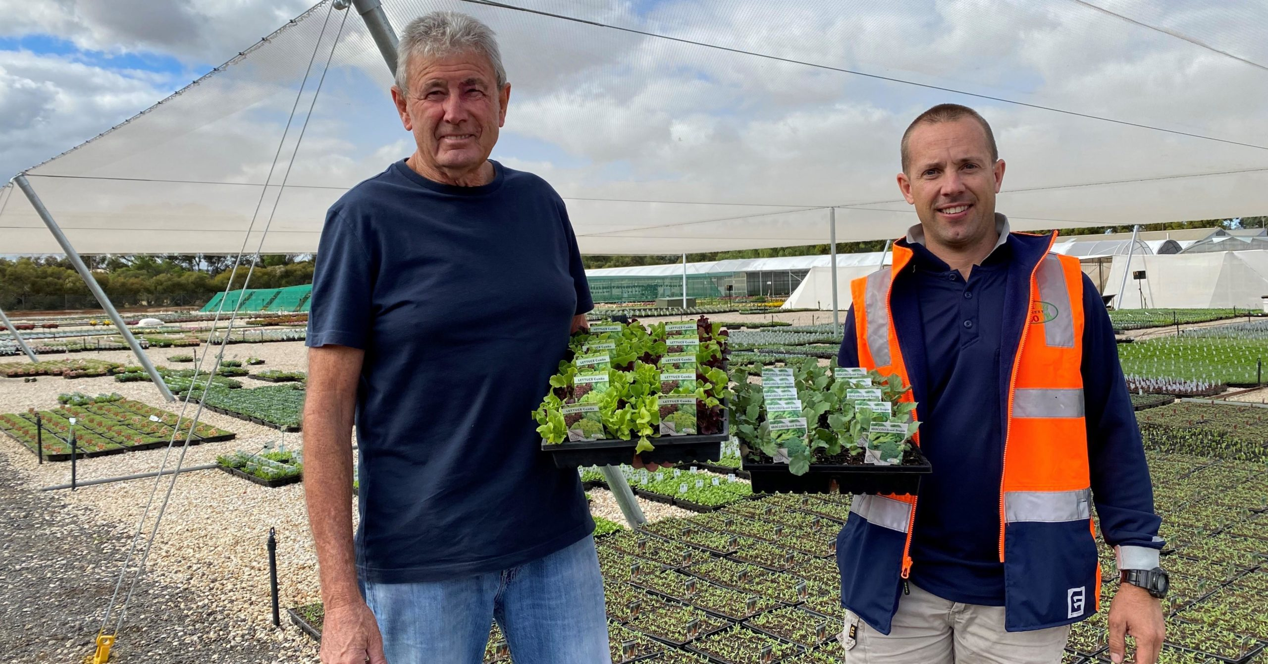 Nursery Triples Production To Get Veggie Seedlings Back On Shelves Indaily